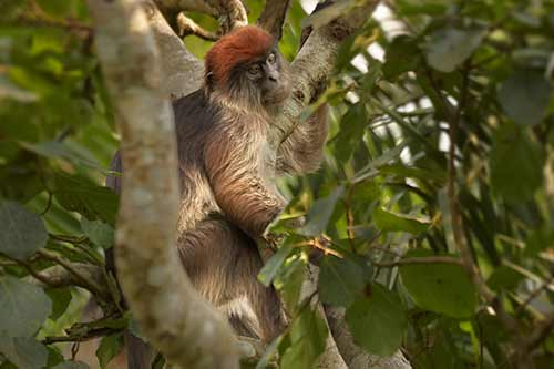 Monkey in the National Park