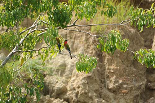 Birds in the National Park